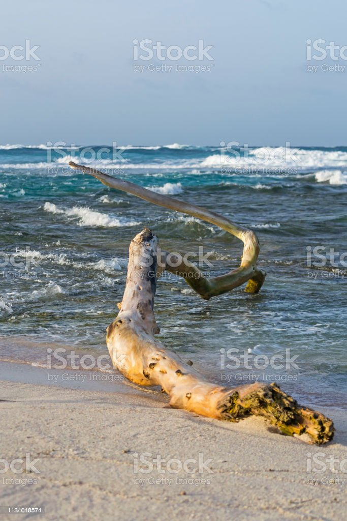 Trunk of a tree on the white sand stock photo
