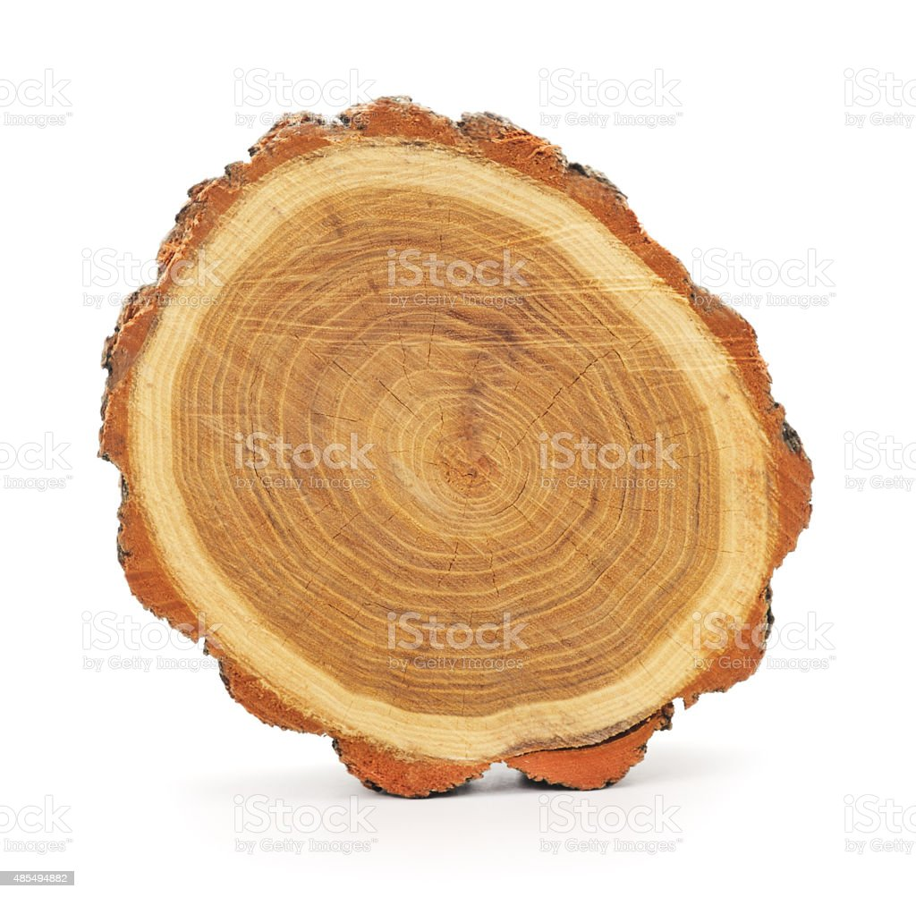 Trunk of the tree. stock photo