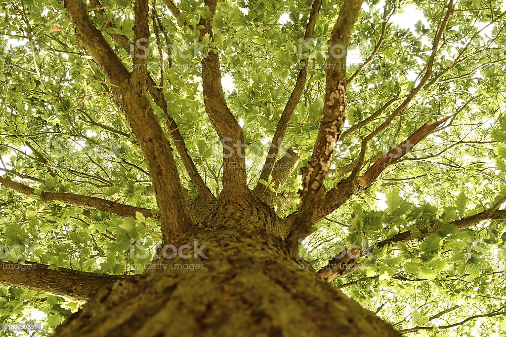 trunk of tree with branches royalty-free stock photo