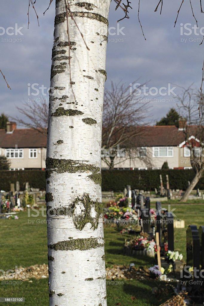 Trunk of weeping silver birch Betula pendula in cemetery stock photo
