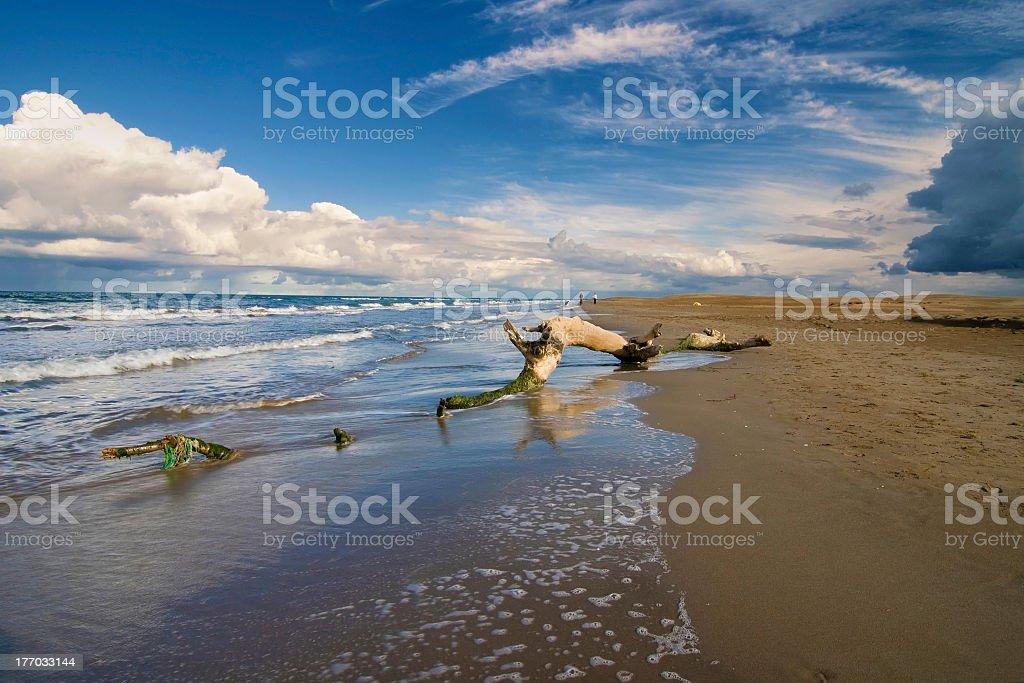 Trunk on a beach stock photo