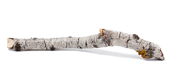 Trunk or branch of a birch stock photo