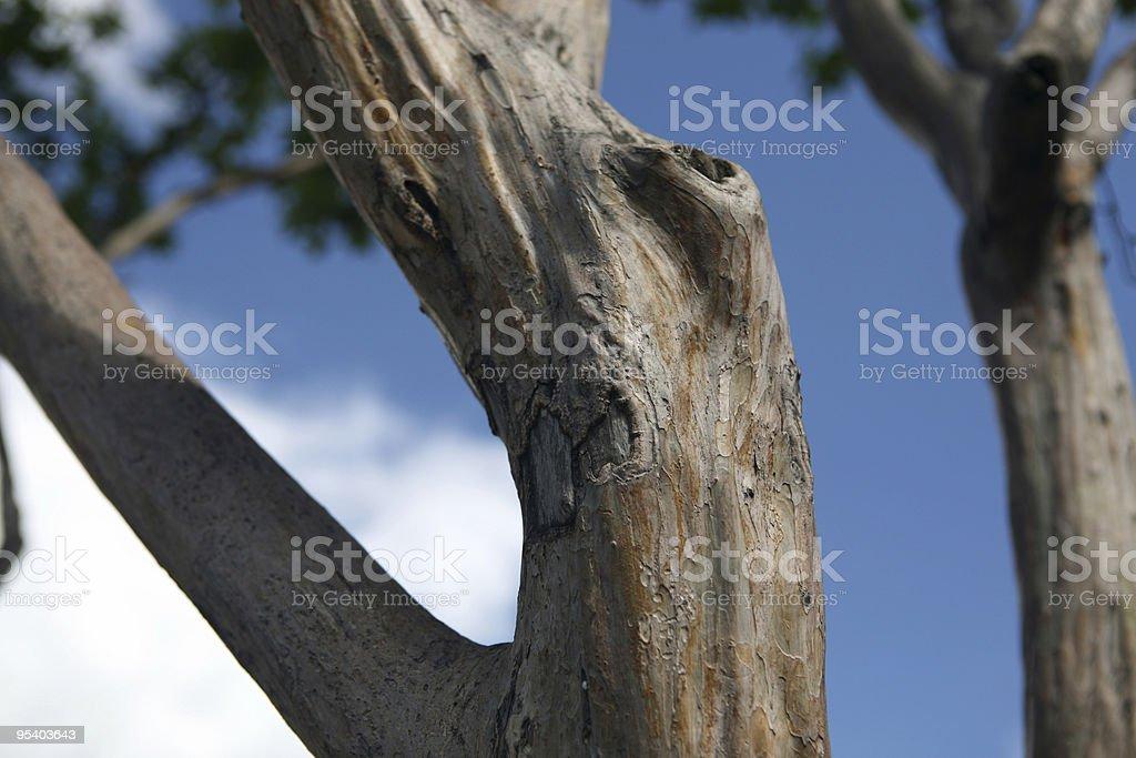 trunk stock photo