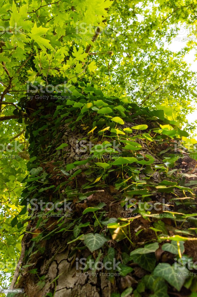 trunk royalty-free stock photo