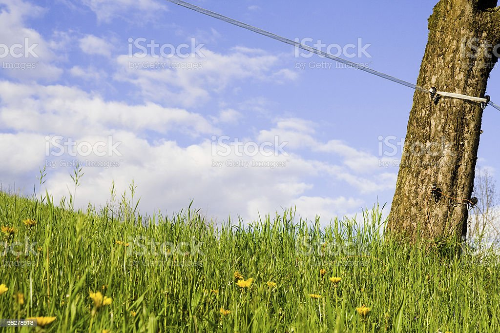 Trunk royalty-free stock photo