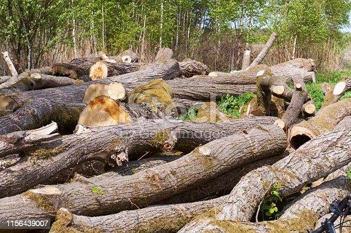 felled trees, trunks of felled trees