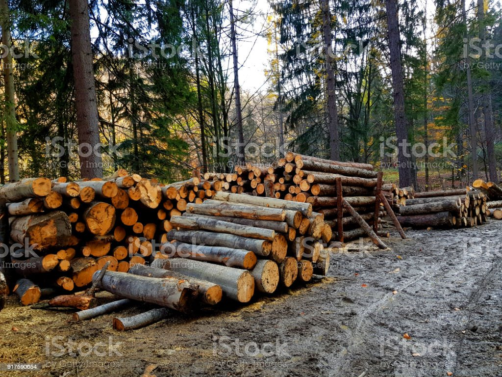 Trunks Of Trees Cut And Stacked In The Forest Stock Photo & More