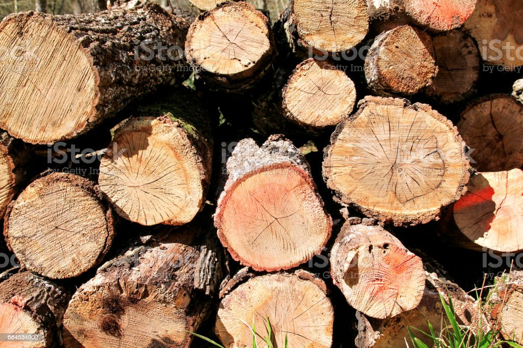 Trunks of trees piled in forest, close up. Wood industry. Pile of wood. Texture of wood. Trunks of trees piled on the ground in the woods. Logs of wood, cross cut. royalty-free stock photo