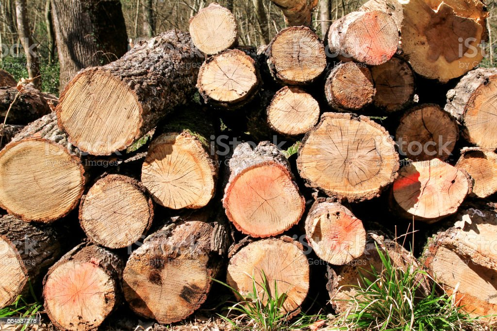 Trunks of trees piled in forest, close up. Wood industry. Pile of wood. Texture of wood. Trunks of trees piled on the ground in the woods. royalty-free stock photo