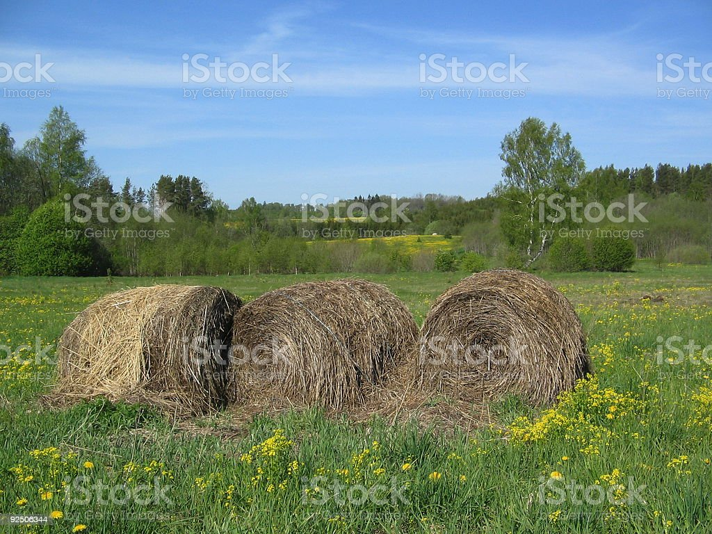 trusses of hay royalty-free stock photo