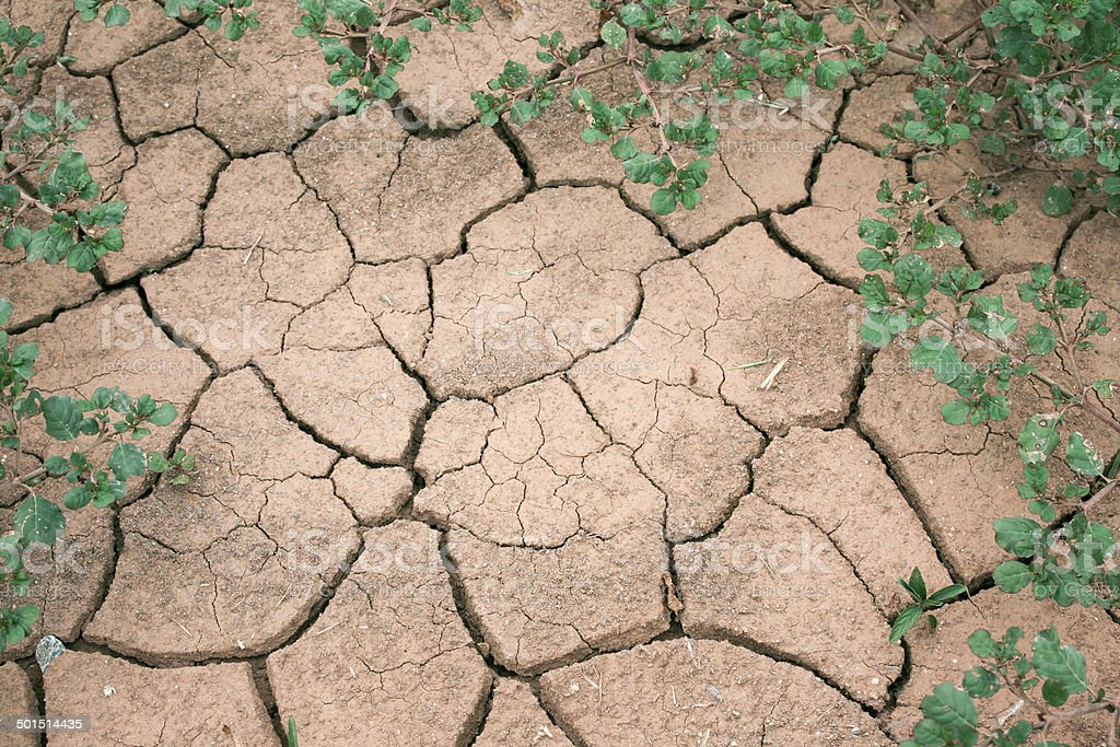 Try to growing, crack earth, nature concept stock photo