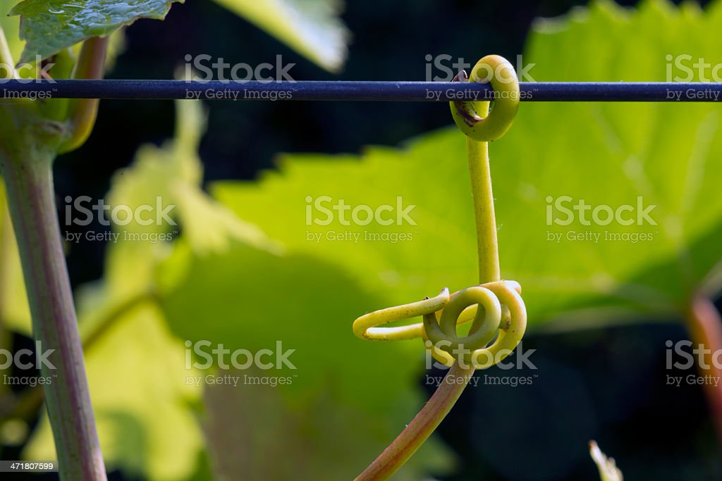 Try to hold on royalty-free stock photo
