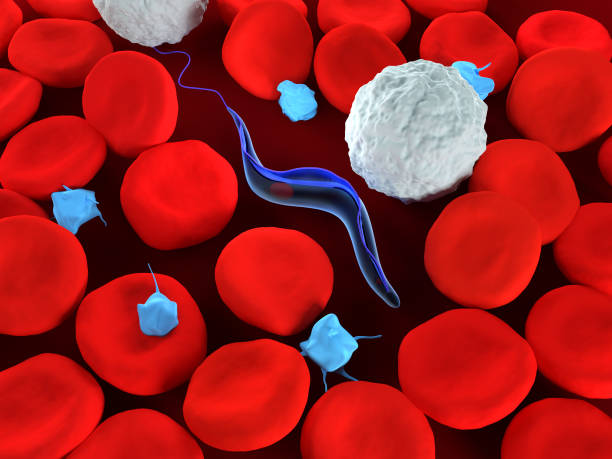 Trypanosoma stock photo