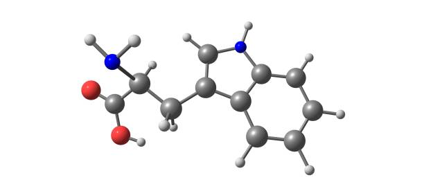Tryptophan molecular structure isolated on white – zdjęcie