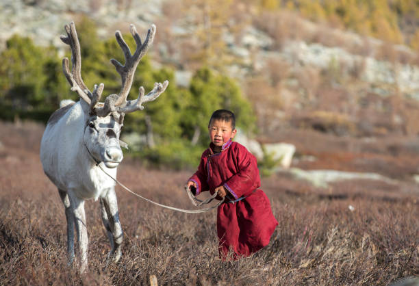 tsaatan boy, dressed in a traditional deel, with a reindeer stock photo