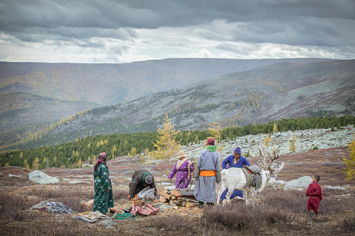 tsaatan familu preparing firewood in the nature of norther Mongolia