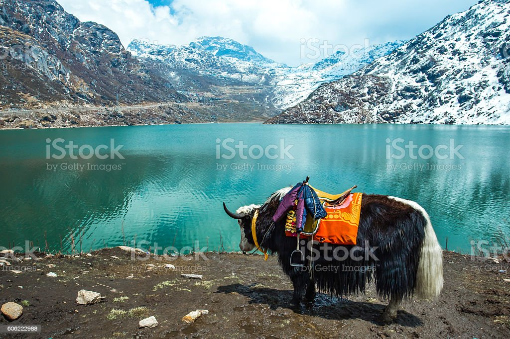 Tsangmo Lake in Sikkim, India stock photo