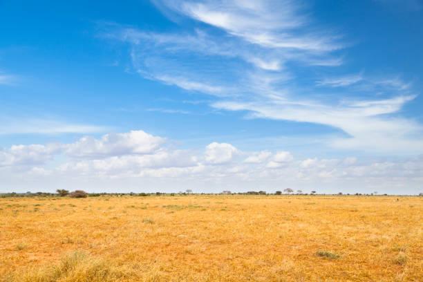 tsavo ost-landschaft in kenia - afrikanische steppe dürre stock-fotos und bilder