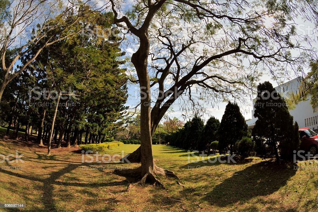 Tsinghua University campus landscape stock photo