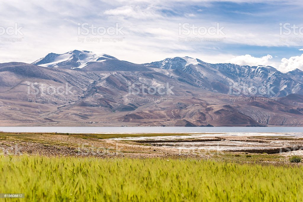 Tso moriri lake view with rice field in summer stock photo