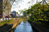 The image of the Tsuboi river in city centre of Kumamoto, Kyushu, Japan. This area is near Kumamoto castle.