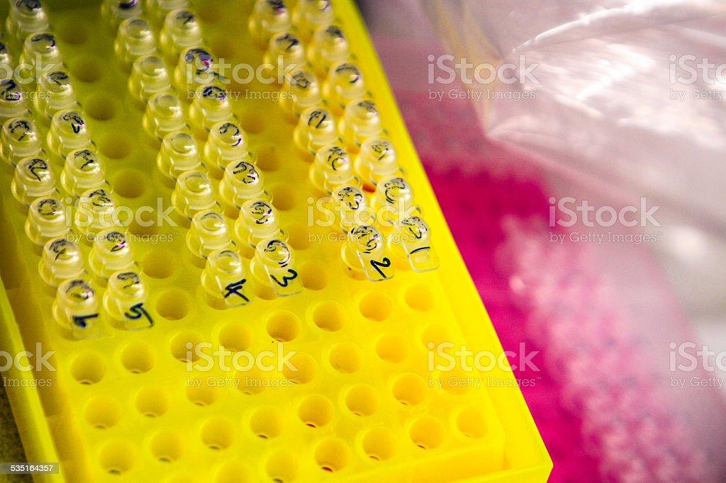 PCR Tubes in Rack stock photo