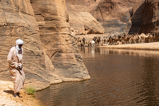 Guelta d'Archeï, Chad - February 08, 2020: Herder from the Tubu people with his camels in the legendary Guelta d'Archeï, the mystic spring of water inside the remote Ennedi Mountains in the Sahara desert, North-East Chad. This place is since centuries one of the main sources of water for the Tubu people and their camel herds. The Ennedi massif was declared as an UNESCO World Heritage site in 2016.