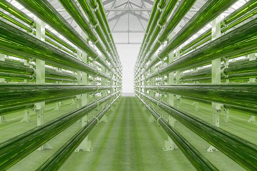Tubular Algae Bioreactors Fixing CO2 To Produce Biofuel As An Alternative Fuel
