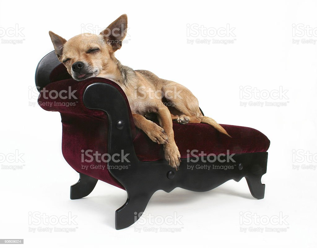 Tuckered Out stock photo