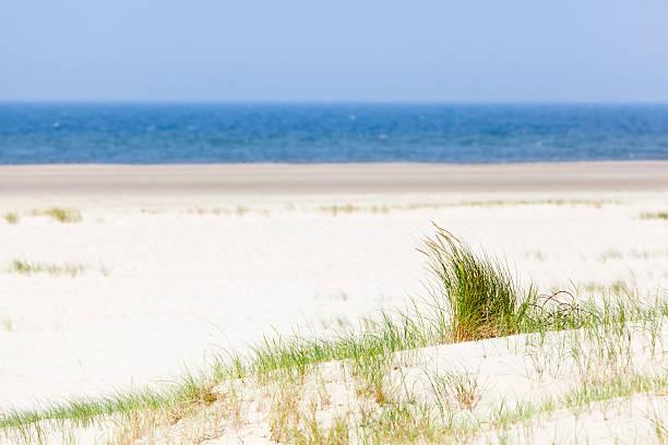 tuft von gras im strand-dünen - urlaub norderney stock-fotos und bilder