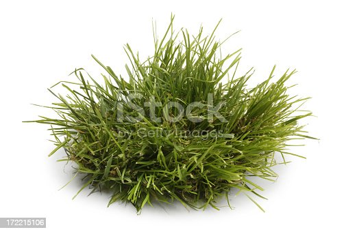 A  small green tuft of grass isolated on a white background. A soft shadow falls below the leaves of grass.