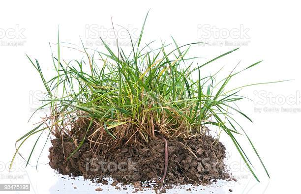 Photo of Tuft of grass with worm