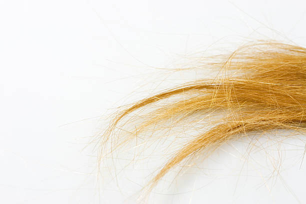 tuft of hair tuft of blond hair on white background. highlights hair stock pictures, royalty-free photos & images