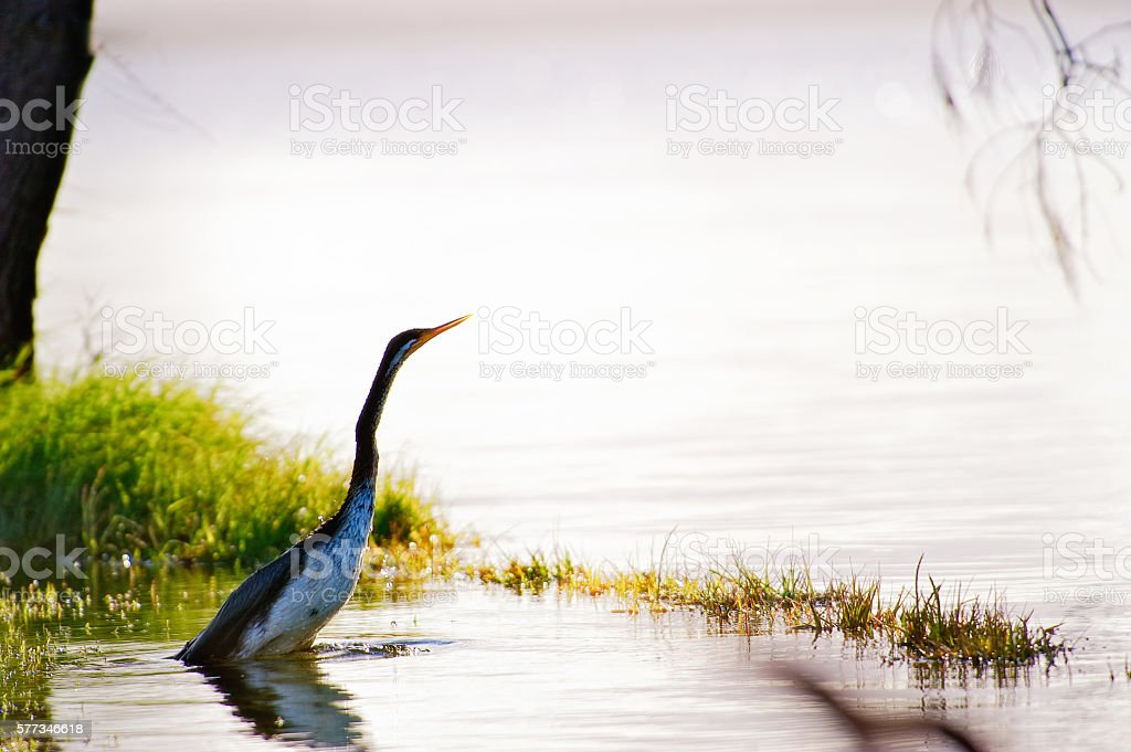 Tuggarah Lakes stock photo
