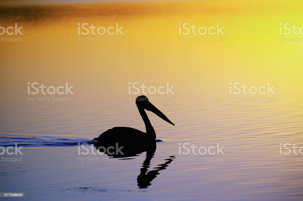 Tuggerah Lakes at sunset stock photo