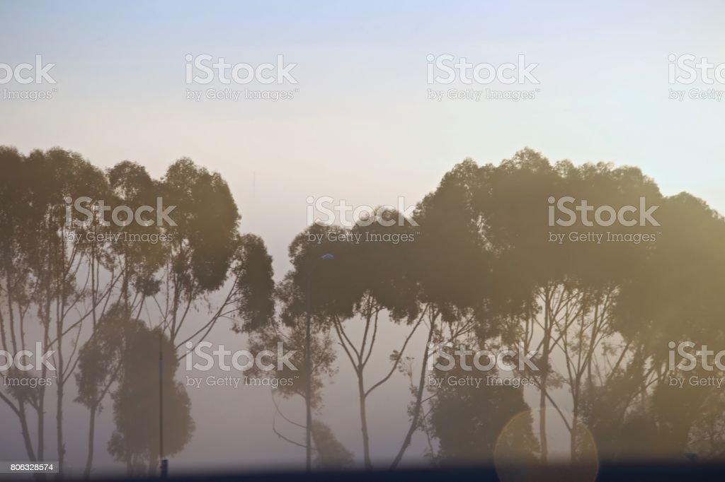 Tule Fog stock photo