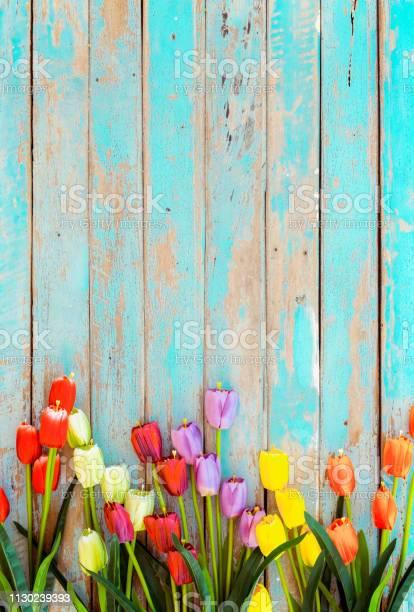 Tulip blossom flowers on vintage wooden picture id1130239393?b=1&k=6&m=1130239393&s=612x612&h=kzczqbckgeyjq5igh5zwluhc1naduslejf2u9 z3bvc=