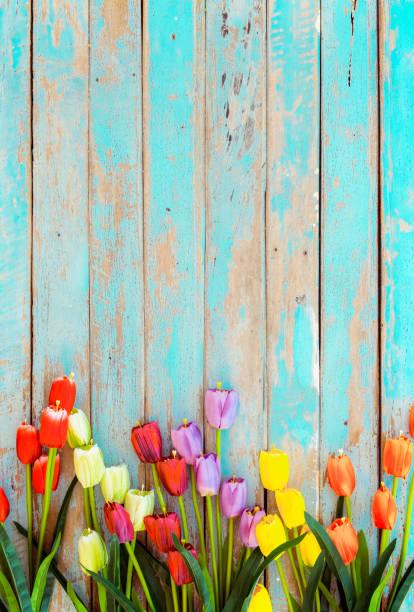 Tulip blossom flowers on vintage wooden picture id1130239393?b=1&k=6&m=1130239393&s=612x612&w=0&h=284xm7idlgwxodywzjyec3csi52ykmlck kop05qyei=