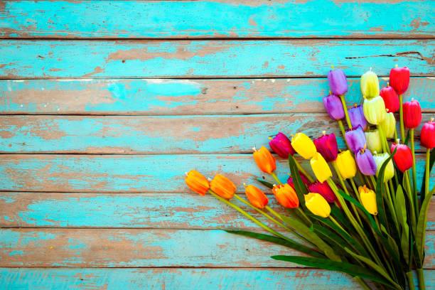 Tulip blossom flowers on vintage wooden picture id1134851949?b=1&k=6&m=1134851949&s=612x612&w=0&h=gyl4c8oyolnbxlln61d8ixhhnqjhw8li5hc bk0ioka=