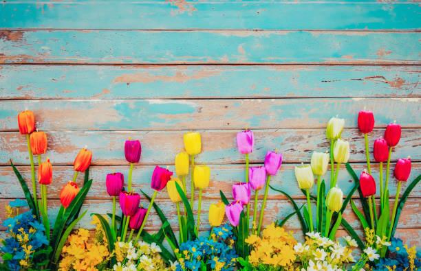 Tulpenblütenblüten auf Vintage-Holz – Foto