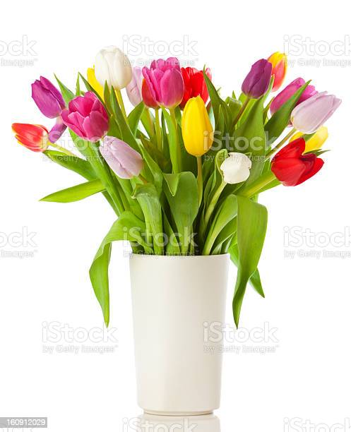 Multicolored tulips in a vase, isolated on white background