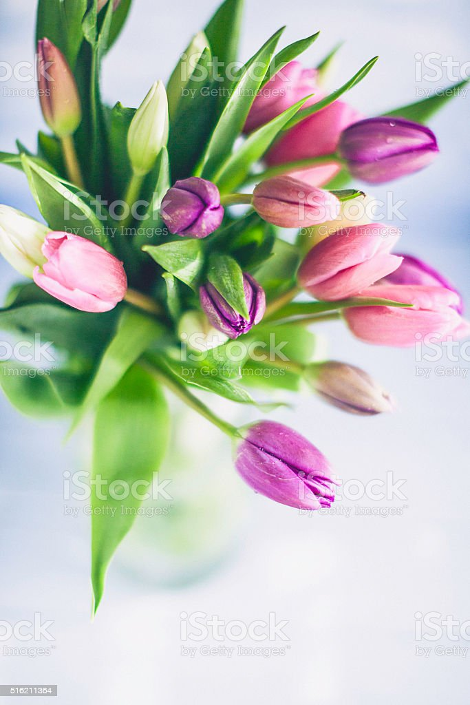 Tulip bouquet in simple jar for Mother's Day stock photo