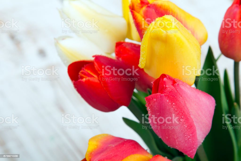 bouquet de tulipes sur fond en bois blanc photo libre de droits