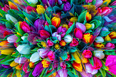 Tulip bouquet from above, color explosion