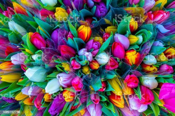 Tulip bouquet picture id1089152736?b=1&k=6&m=1089152736&s=612x612&h=18l8w9emttbpq897zybvrht8sjsp67tfbfsrwnt7wby=