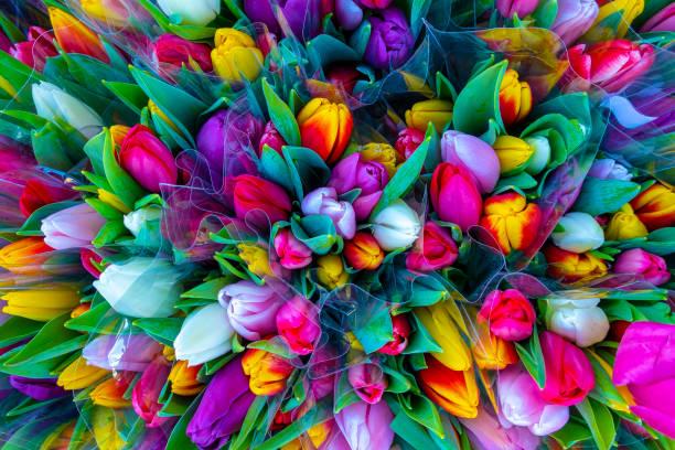 Tulip bouquet picture id1089152736?b=1&k=6&m=1089152736&s=612x612&w=0&h=kyelx3jjddtj2k21j m7yu8ic7qge2ebw5vlyjer048=