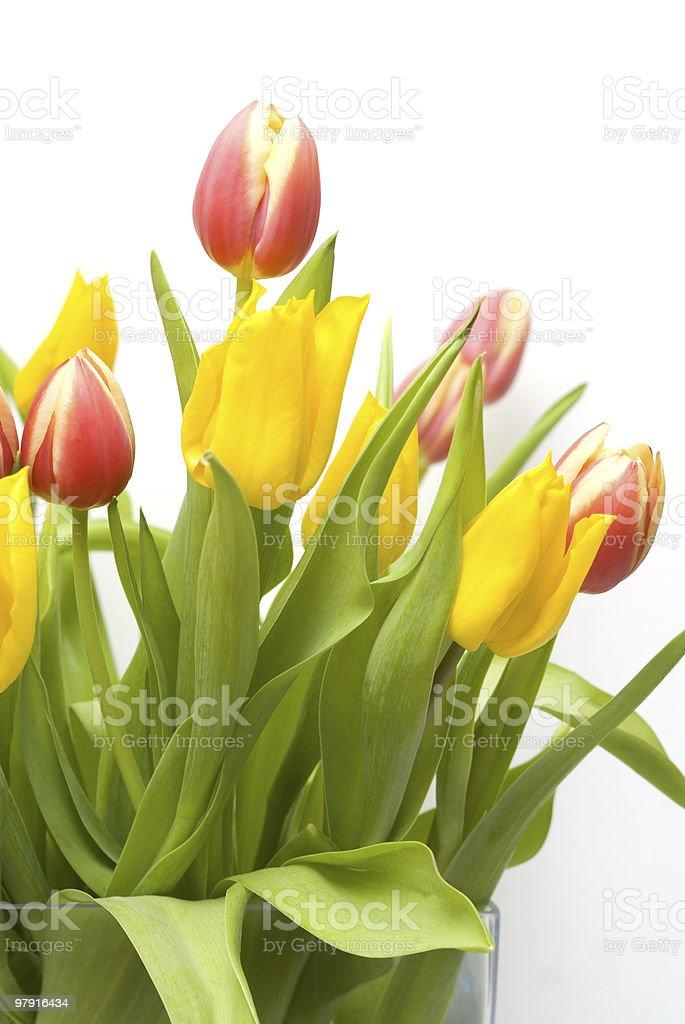 Tulip Bouquet royalty-free stock photo
