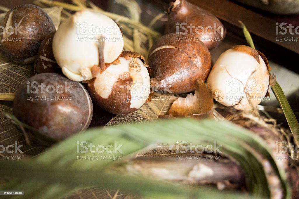 Tulip Bulbs To Plant In Fall Garden Background Stock Photo