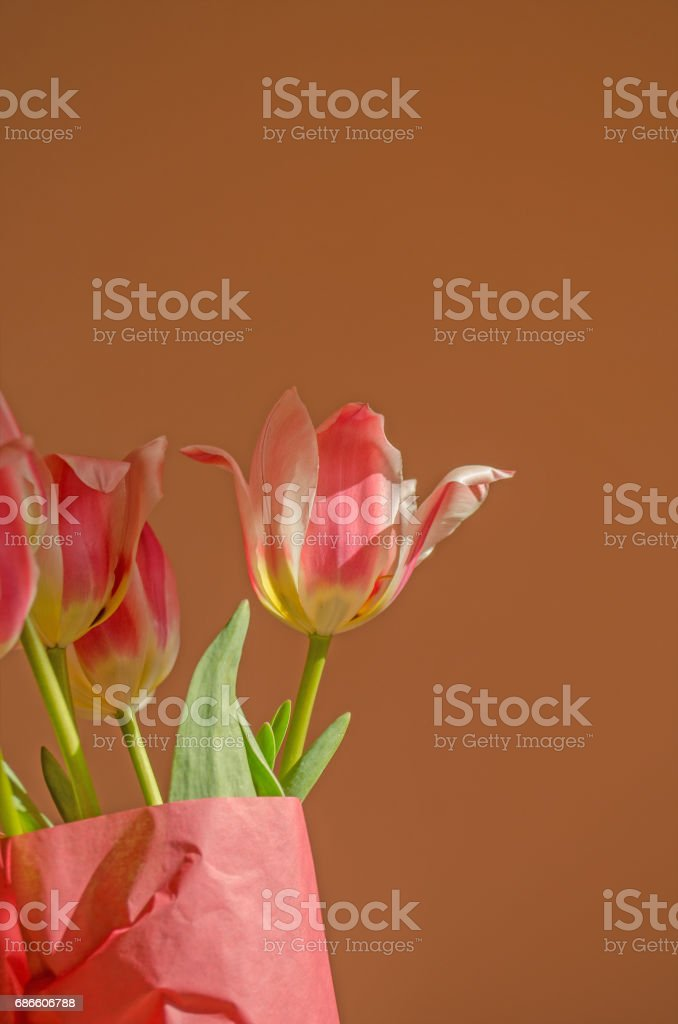 Tulip flower bouquet and green leaves background royalty-free stock photo