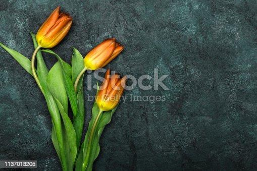 Tulip flower on dark background, copy space. A beautiful spring bouquet of orange flowers